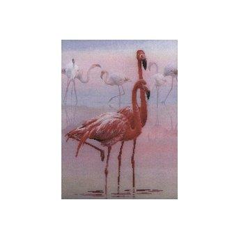 Riolis Flamingos