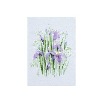 Riolis Schwertlilien im Frühling