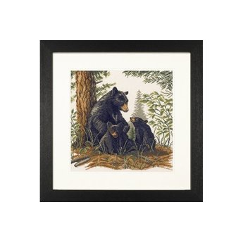 Black Bear Boy