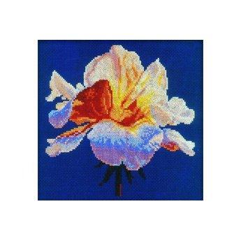 RTO Coral Rose