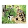SunsOut Duck Inspector