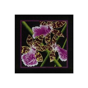RTO Orchids Zigopetalum