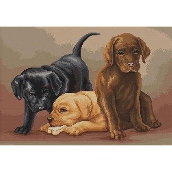 Luca-S Puppies