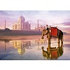 Educa Elephant at Taj Mahal