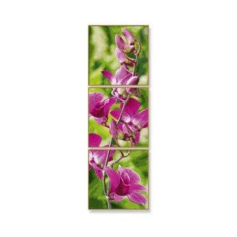 Schipper Orchideeëntak