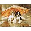 Luca-S Couple under an Umbrella