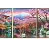 Schipper Cherry Blooming in Japan