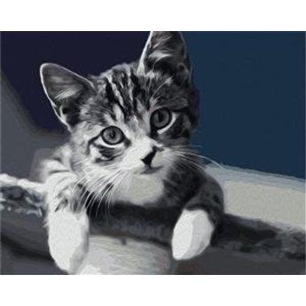 Artventura Kätzchen