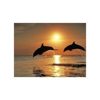 Artibalta Spelende Dolfijnen