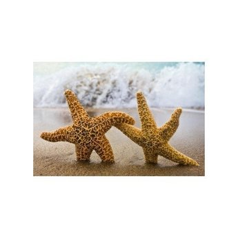 Artibalta Two Sea Stars