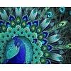 Artibalta Peacock Patterns