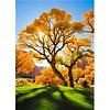 Artibalta Autumn Tree