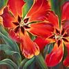 Artibalta Tulips