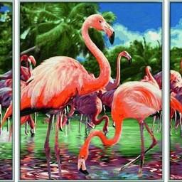 Schipper Flamingo's