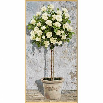 Schipper Witte Rozenboom