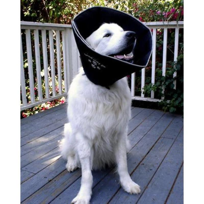 ComfyCone Hondenkap