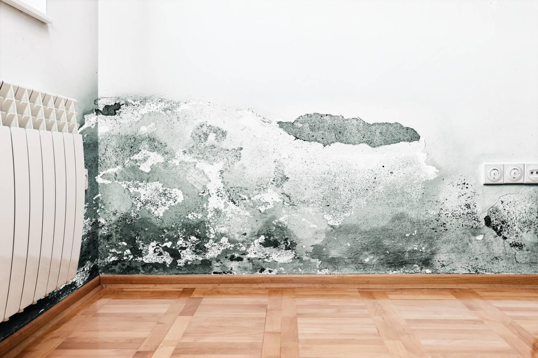 Schimmel Verwijderen Muur : Oorzaken zwarte schimmel schimmel verwijderen renovatiecenter