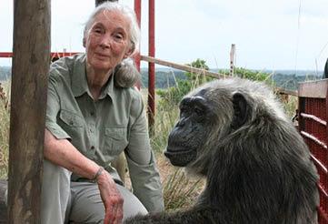 Partner Jane Goodall Institut Deutschland