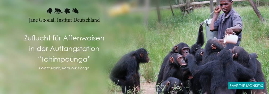 ajoofa Jane Goodall Chimps Tchimpounga
