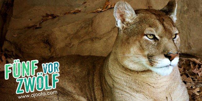 5 vor 12: Der Puma