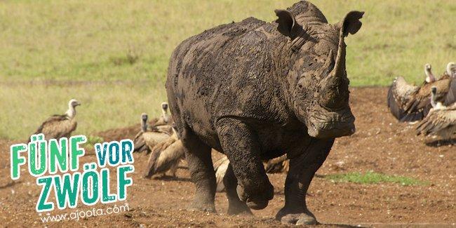 5 vor 12: Das Nashorn