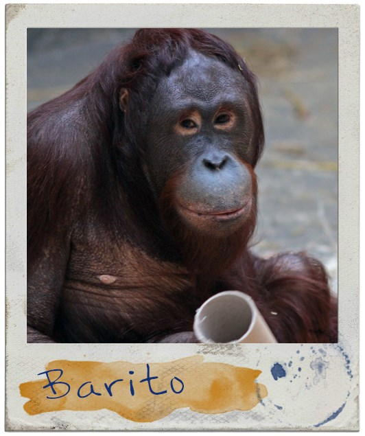 Portrait Barito