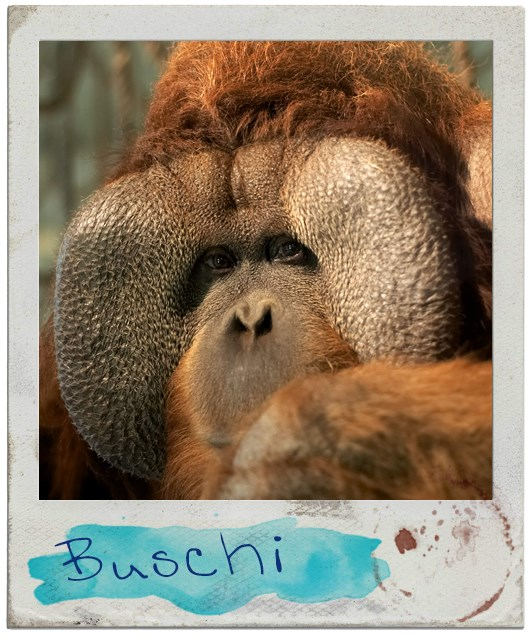 Portrait Buschi