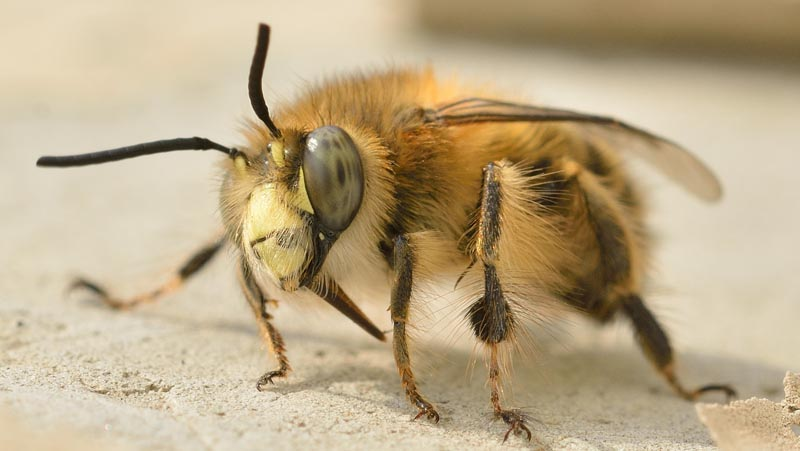 Bee Good Imker