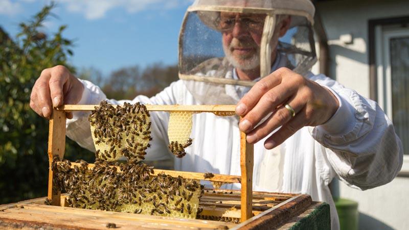 BeeGood Biene