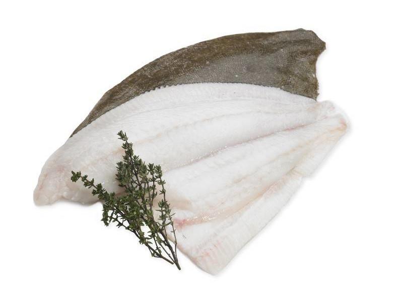 Tarbot vers, heel (ca.500 gram)