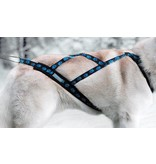 Weight Pulling Dog Harness, X - Back Style for Canicross, Bike, Sled, Scooter, Bike-, Ski-Joring, Jogging,.. blue paws
