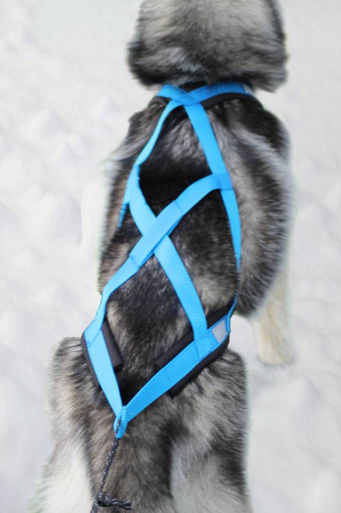 Northern Howl Northern Howl Zuggeschirr für Hunde X-Back Blau für Zughundesport