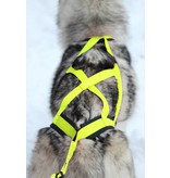 Northern Howl X-Back harnais pour chien pour le vélo, ski-joering, scooter, traîneau