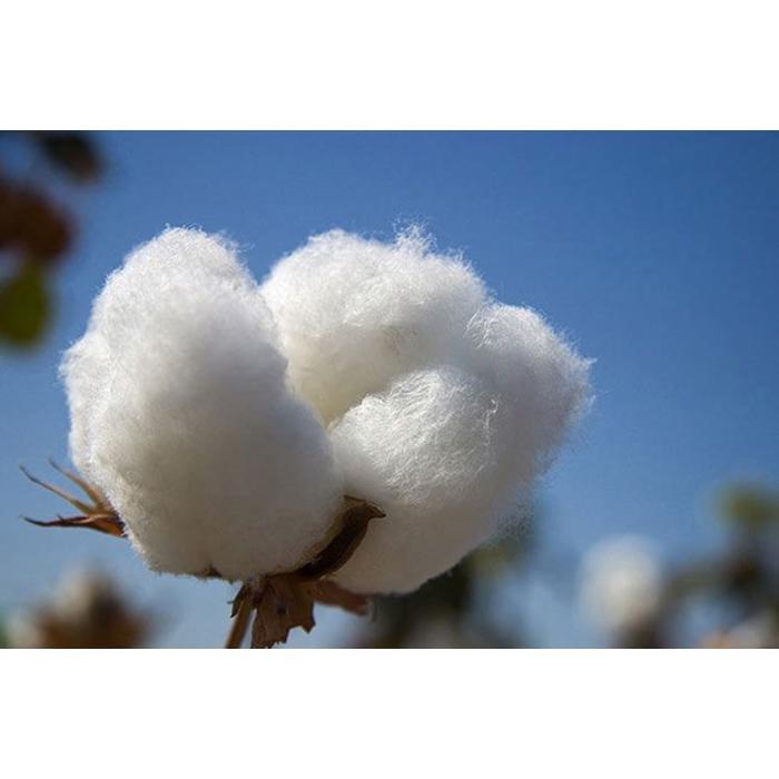 Cotton summer duvet