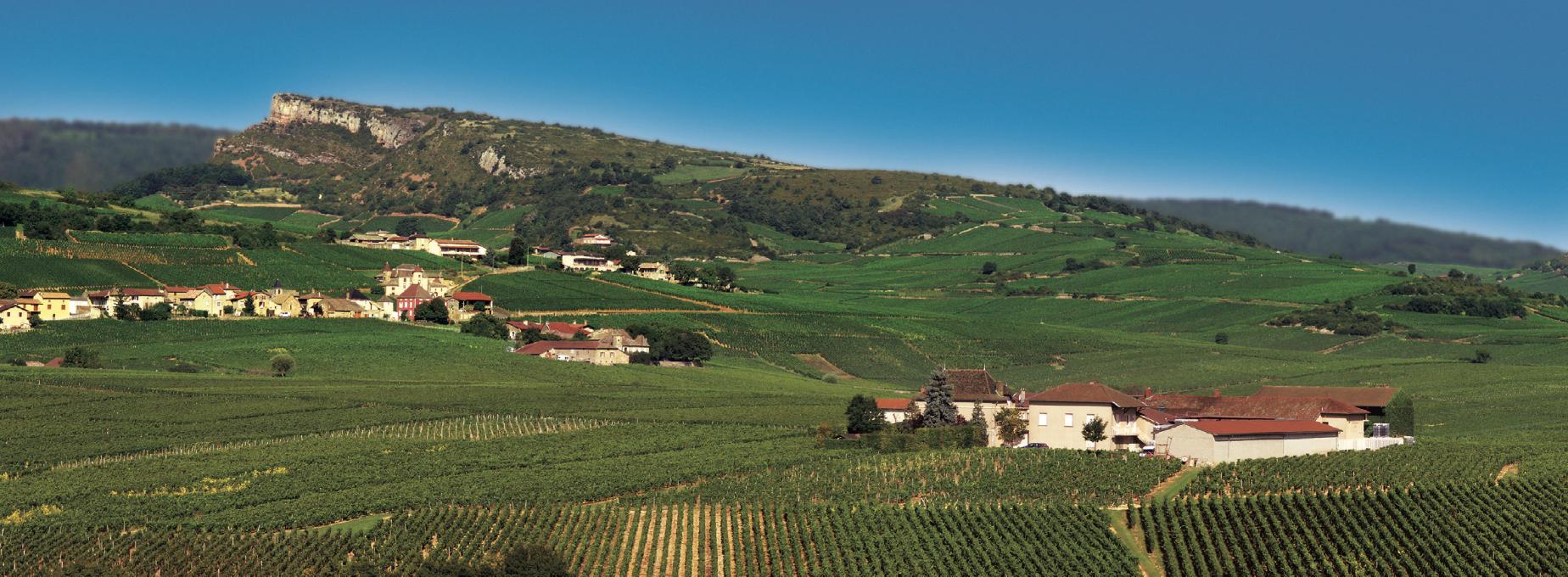 Bourgogne Maçon wijn kopen online Burrier Beauregard