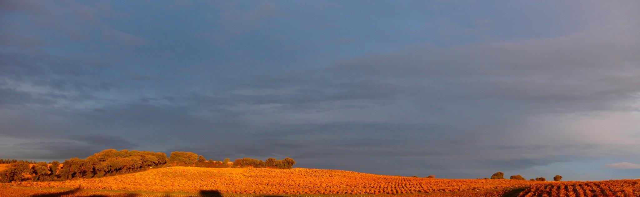 Domaine Solitude Rhône wijn kopen