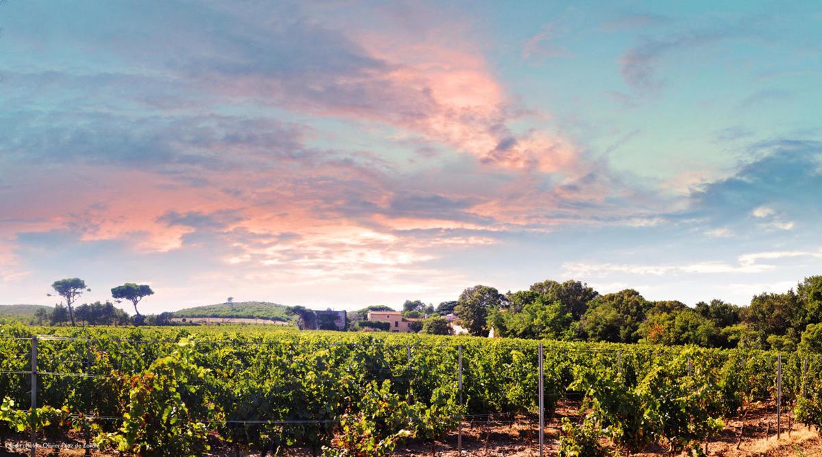 Chateau la Negly La Clape Languedoc wijnen online kopen