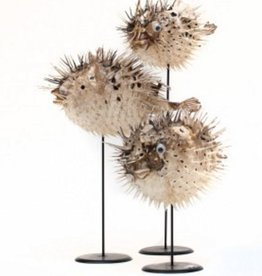 Blow Fish on Stand