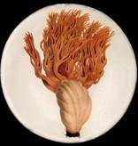 Astier de Villatte John Derian Plate - Glavaire Coralloide