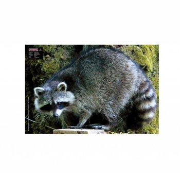 Maximal SMALL GAME 40X60 RACCOON