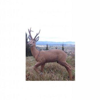 Imago3D Roe deer.Cat. 3 IFAA. Imago 3-D