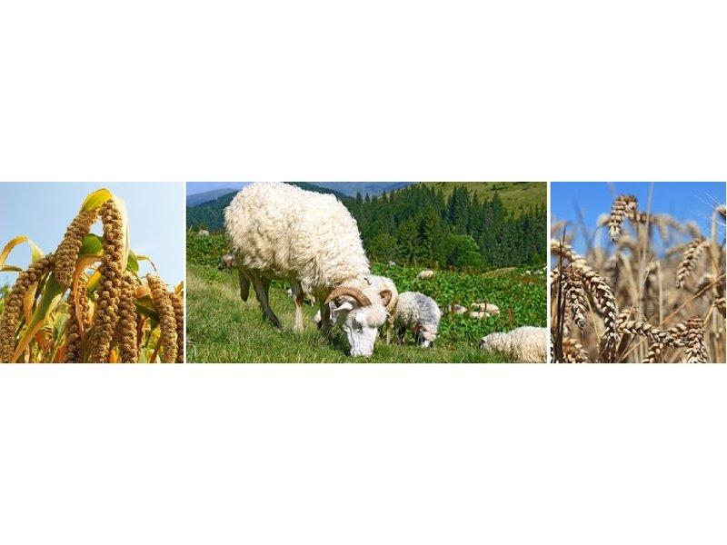 Mudis Mudis® voedingskussen 150x30, verkrijgbaar met diverse biologische kussenvullingen.