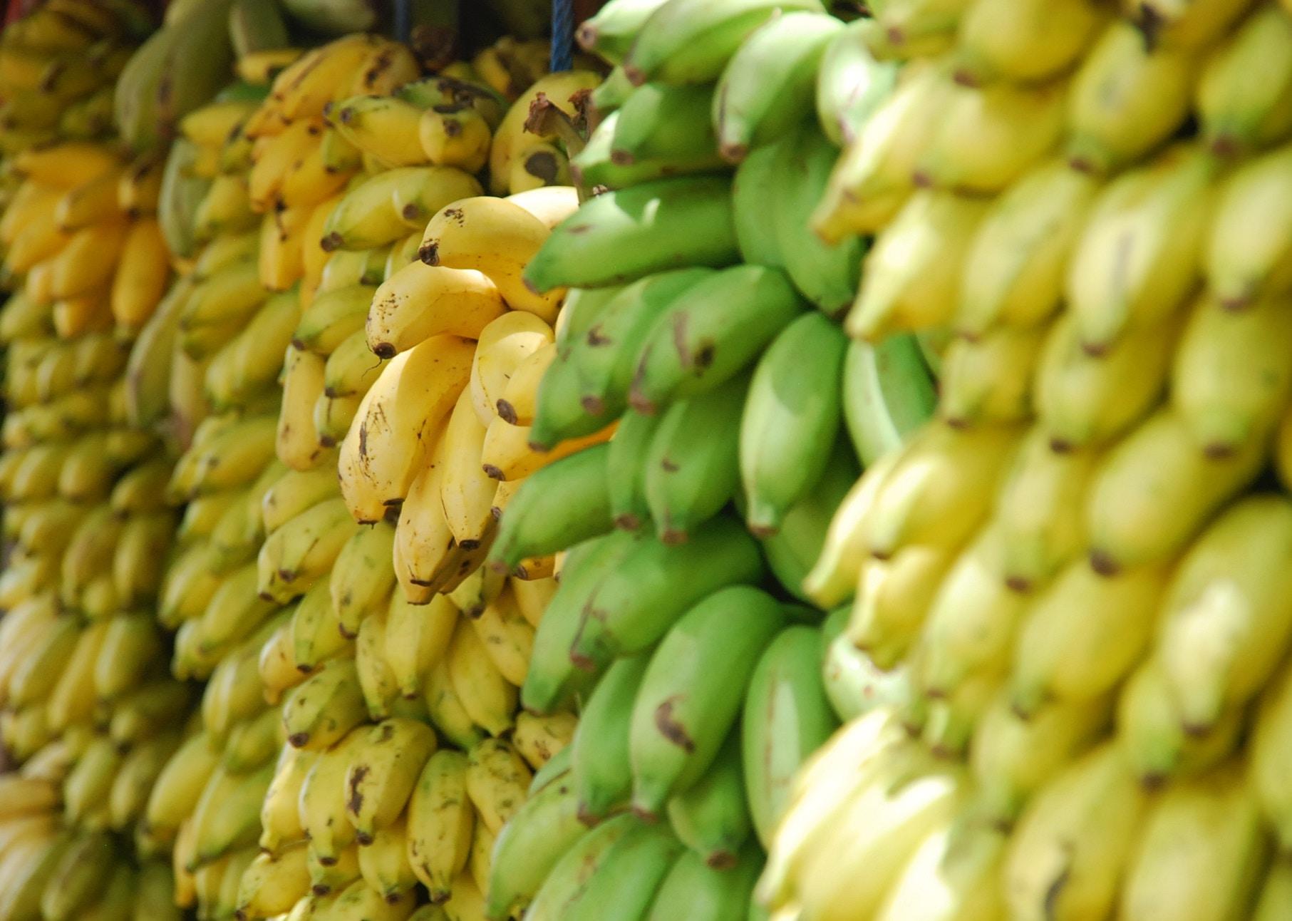 Der Magnesiumgehalt von Bananen wird meist überschätzt