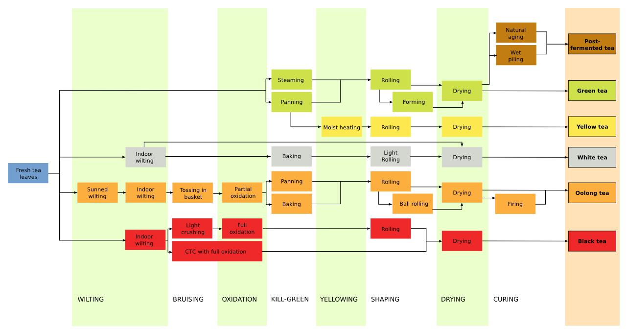 Graphische Einteilung der verschiedenen Teearten von der englischen Wikipedia