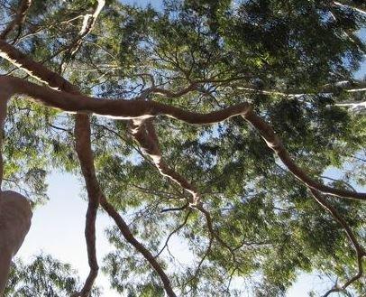 Farfalla Citroen Eucalyptus etherische olie biologisch 10 ml..