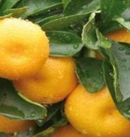 Farfalla Mandarijn Rood (Mandarine Rot) BIO Demeter 10 ml