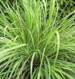 Farfalla Lemongrass BIO 10 ml.