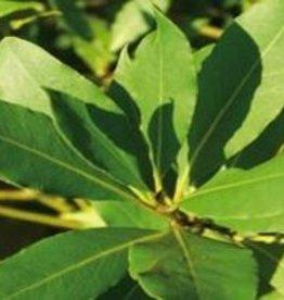 Farfalla Laurier (Lorbeer) BIO-demeter 5 ml.
