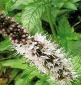 Farfalla Kruizemunt-Spearmint (Krauseminze) BIO 5 ml.
