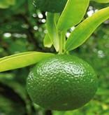 Farfalla Mandarijn Groen etherische olie Bio Demeter 10 ml.